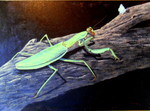 Mantis and Moth. Available, contact artist.